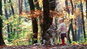 Muchacha y perro Mujer hermosa que juega con su perro Niño y perro Muchacha que juega con el perro en la niña del bosque con almacen de video