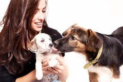 Muchacha y perros Imágenes de archivo libres de regalías