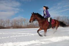 Muchacha y semental de la bahía - montar a caballo a caballo en campo de nieve imagen de archivo