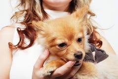 Muchacha y su animal doméstico imágenes de archivo libres de regalías