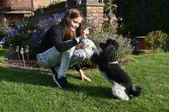 Muchacha y su perro de caniche Imagen de archivo libre de regalías