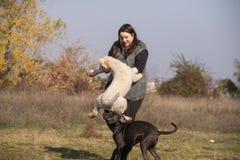 Muchacha y sus perros en el campo Foto de archivo libre de regalías