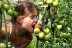 Muchacha y tomates Foto de archivo libre de regalías