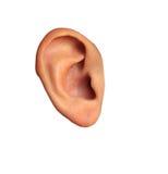 Muchachas del oído en el aislamiento Imagen de archivo libre de regalías