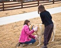 Muchachas que cuidan para su perro fotografía de archivo libre de regalías