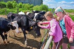 Muchachas que frotan ligeramente vacas en granja Fotos de archivo libres de regalías