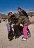 Muchachas y perros Imagen de archivo libre de regalías