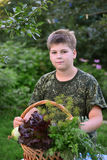 Muchacho adolescente con la cesta de verduras frescas en el jardín Fotos de archivo
