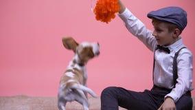 Muchacho alegre que juega con el perrito divertido del beagle, entretenimiento con el animal doméstico de la familia almacen de video