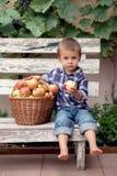 Muchacho, comiendo manzanas Fotografía de archivo libre de regalías
