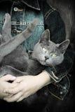 Muchacho con el gato Foto de archivo