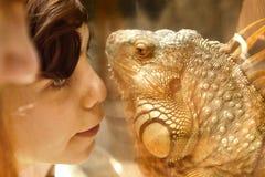 Muchacho con el lagarto de la iguana a través del vidrio en parque zoológico Foto de archivo libre de regalías