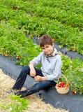 Muchacho con la cosecha de fresas en una cesta Fotografía de archivo libre de regalías