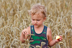 Muchacho con la manzana en un campo del trigo Imagen de archivo