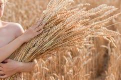 Muchacho con las espigas de trigo en el campo del cereal Foto de archivo libre de regalías