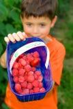Muchacho con las frambuesas frescas Fotos de archivo libres de regalías
