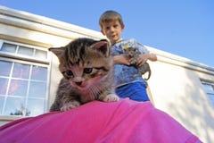 Muchacho con los gatitos en un día soleado Foto de archivo