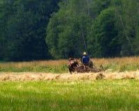 Muchacho de Amish que hace heno el campo Imagenes de archivo