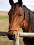 Muchacho de caballo Foto de archivo libre de regalías