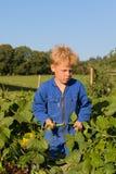 Muchacho de granja que cosecha en huerto Imágenes de archivo libres de regalías