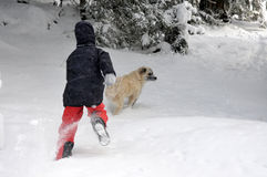 Muchacho de Tennage que juega con el perro Foto de archivo