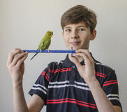 Muchacho del adolescente con un periquito verde Foto de archivo