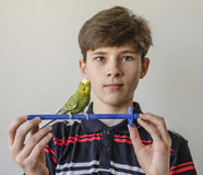 Muchacho del adolescente con un periquito verde Fotografía de archivo