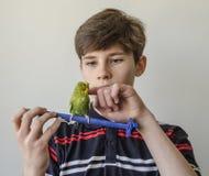 Muchacho del adolescente con un periquito verde Imágenes de archivo libres de regalías