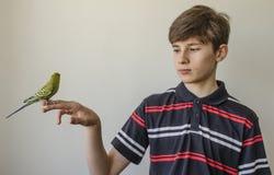 Muchacho del adolescente con un periquito verde Fotos de archivo
