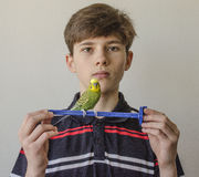 Muchacho del adolescente con un periquito verde Imagen de archivo libre de regalías