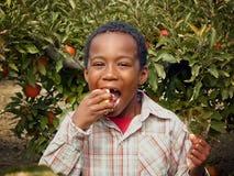 Muchacho del afroamericano que come un Apple en una huerta Imágenes de archivo libres de regalías