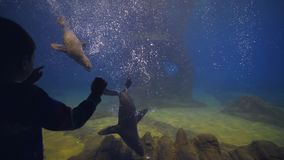 Muchacho del niño en el oceanarium que mira jugando los lobos marinos que flotan en agua transparente clara en acuario metrajes