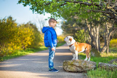 Muchacho elegante hermoso lindo que goza del parque colorido del otoño con su perro inglés rojo y blanco del mejor amigo del toro Foto de archivo