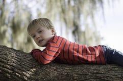 Muchacho en árbol Fotos de archivo libres de regalías