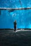 Muchacho en bóveda del delfín foto de archivo