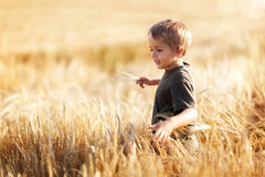 Muchacho en campo de trigo Imagen de archivo