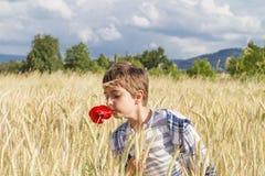 Muchacho en campo de trigo Fotografía de archivo