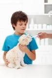 Muchacho en el doctor veterinario con su pequeño perrito Foto de archivo libre de regalías