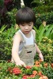 Muchacho en el jardín Foto de archivo libre de regalías