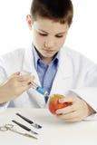 Muchacho en la capa del laboratorio que inyecta el líquido azul en manzana Fotos de archivo