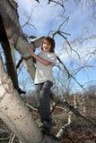 Muchacho en árbol Fotografía de archivo
