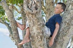 Muchacho en un árbol Fotografía de archivo