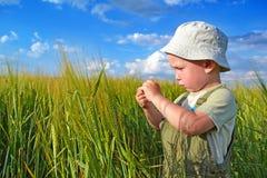 Muchacho en un campo de trigo Imagen de archivo