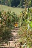 Muchacho en un laberinto del maíz Foto de archivo libre de regalías
