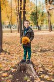 Muchacho feliz del niño que camina en el parque Porciones de hojas amarillas alrededor imagen de archivo libre de regalías