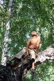 Muchacho feliz en árbol de abedul Imagen de archivo libre de regalías