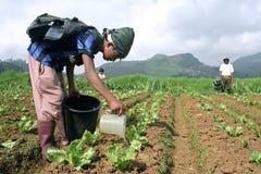 Muchacho filipino y plantas vegetales jovenes de la irrigación Imágenes de archivo libres de regalías