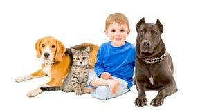 Muchacho, gato y dos perros Imágenes de archivo libres de regalías