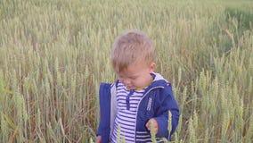 Muchacho joven feliz que se coloca en campo con trigo en el día soleado concepto de pequeño granjero almacen de metraje de vídeo