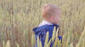Muchacho joven feliz que va en campo con trigo en el día soleado concepto de pequeño granjero metrajes